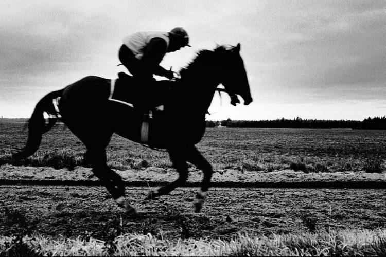 Cepa-gallery-Brendan-Bannon-horse-auction-2021-min