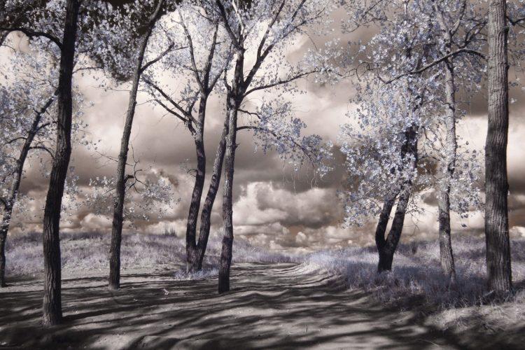 cepa-gallery-Gary- Cardot-Blue-forest-auction-2021-min